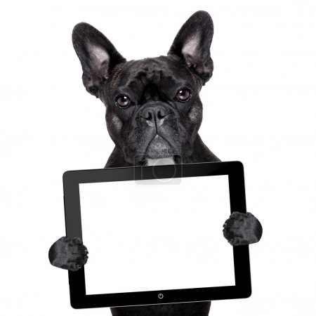 Photo for French bulldog holding a touch screen tablet pc - Royalty Free Image