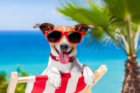 Photo for Dog relaxing on a fancy deck chair - Royalty Free Image