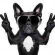 French bulldog with victory or peace fingers and b...