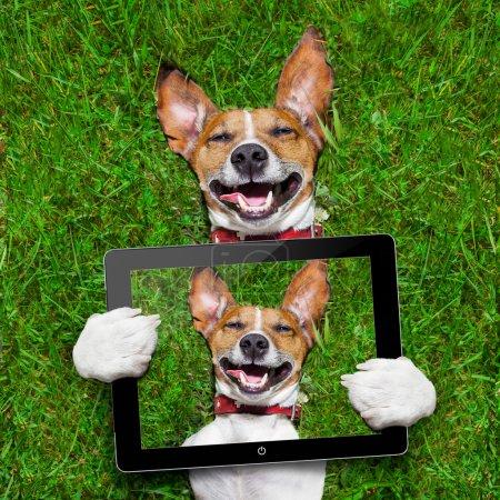 Photo pour Chien visage super drôle couché sur le dos sur l'herbe verte et riant à haute voix en prenant un selfie avec tablette pc - image libre de droit