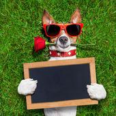 Valentinky pes