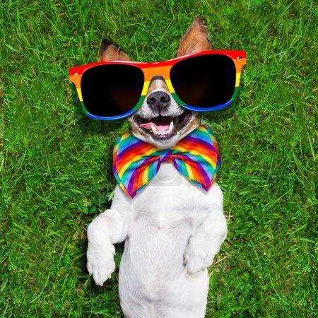 Photo pour Super drôle visage gay chien couché sur le dos sur vert herbe et rire à haute voix - image libre de droit