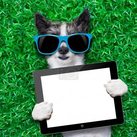 Photo pour Chien tenant une tablette blanc couché sur l'herbe verte dans le parc - image libre de droit