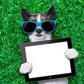 Pes počítače tablet pc