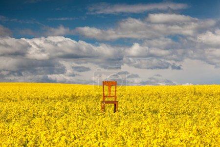 chaise solitaire sur le champ de colza vide