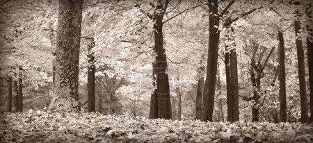 Photo pour Scène de forêt d'automne en noir et blanc avec un soupçon de ton chaud - image libre de droit