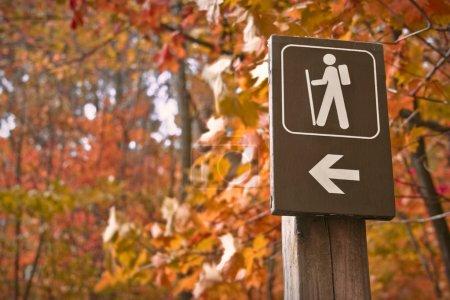 Photo pour Signe pointe vers un chemin de randonnée dans les bois en automne - image libre de droit