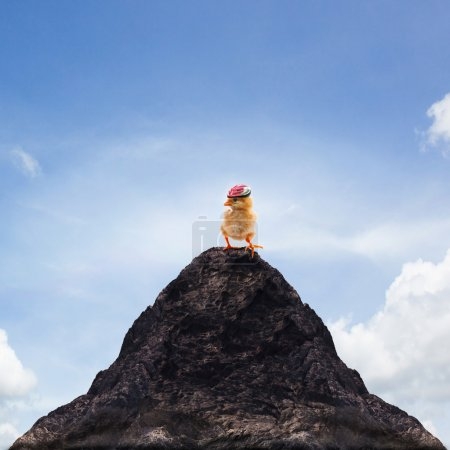 young kid chick baby standing on top peak of mountain abstract f