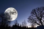 Giant surreal full moon over dark forest