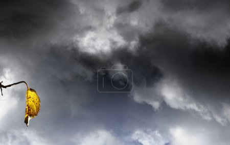 Sky and clouds with leaf