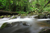 Water fall in green forest