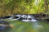 Water fall in bamboo forest