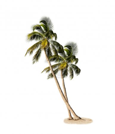 Photo for Palm Trees Isolated On White Background - Royalty Free Image