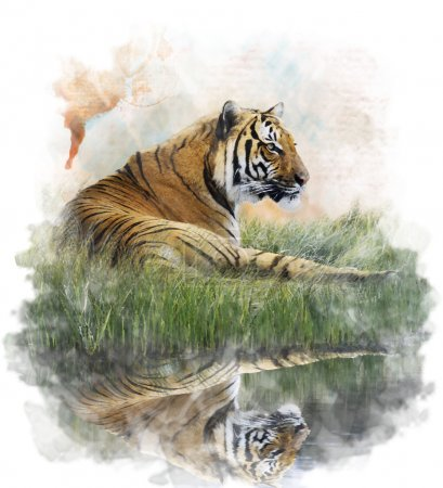 Photo for Watercolor Digital Painting Of  Tiger  On Grassy Bank With Reflection - Royalty Free Image