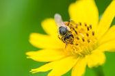 Včela v přírodě