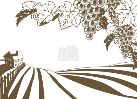 Illustration for Vineyard grapevine farm illustration with rolling planted hills and farmhouse. Grape bunches and vine in foreground. In vintage retro style. - Royalty Free Image