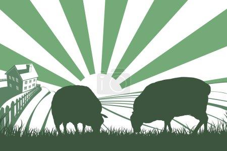 Sheep Farm Sunrise Landscape