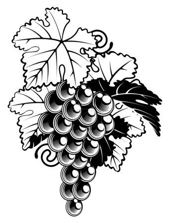 Illustration pour Illustration d'un bouquet de raisins sur une vigne dans un style vintage gravé sur bois - image libre de droit