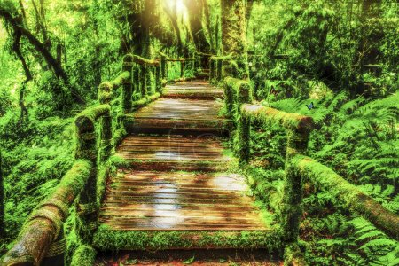Moss around the wooden walkway in rain forest with...