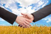 People shaking hands in a wheat field