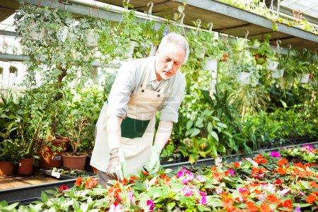 Gardener examining a plant