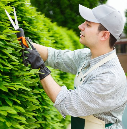 Gardener pruning an hedge