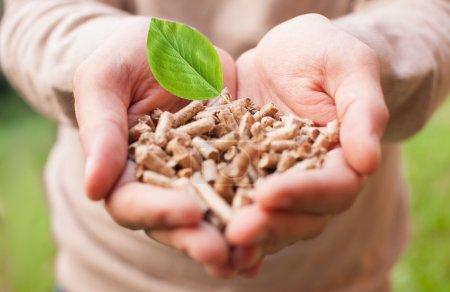 Photo pour Homme tenant beaucoup de granulés de bois dans ses mains - image libre de droit
