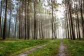 Autumn foothpath and foggy forest at sunrise