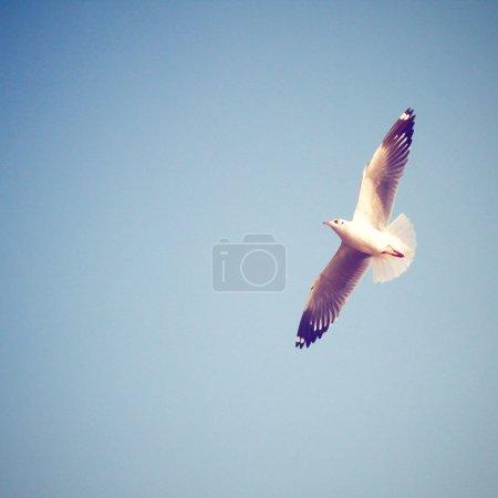 Seagull on blue sky