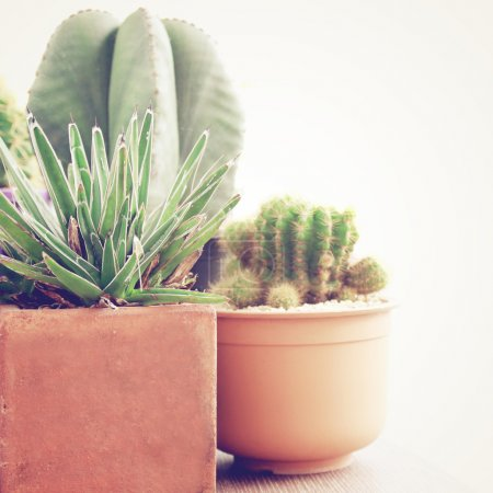 Photo for Various of cactus with retro filter effect - Royalty Free Image