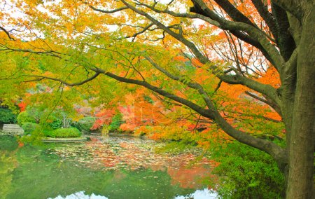 Photo for Japan in autumn red maple trees with lake - Royalty Free Image