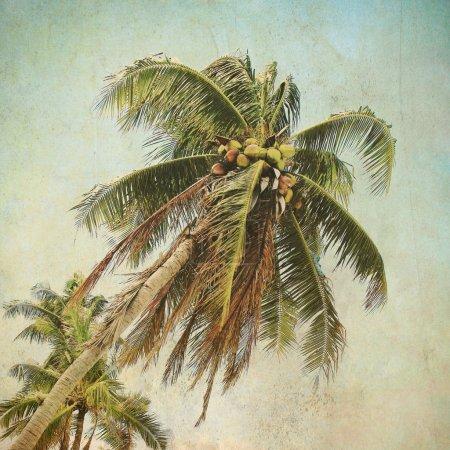 Sea coconut coast