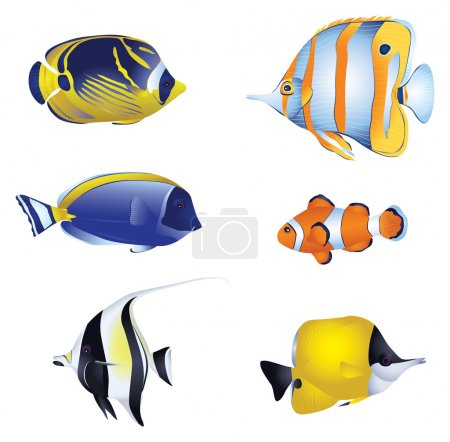 Colorful tropical fish isolated on white background