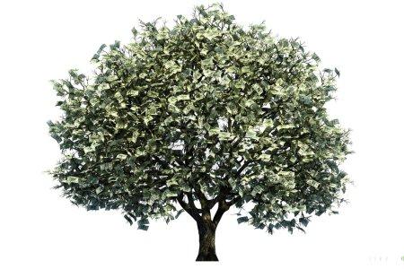 Photo pour Arbre à argent, grand arbre avec de l'argent pour les feuilles sur fond blanc . - image libre de droit