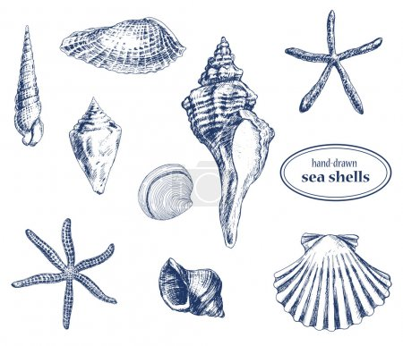 Illustration for Set of various hand drawn sea shells - Royalty Free Image