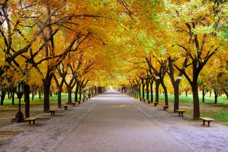Landscape of quiet path in park with nobody in autumn