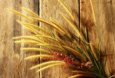 Still life with foxtail grass on grunge wooden background
