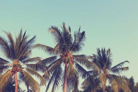 Photo pour Fond de cocotiers, image filtrée vintage - image libre de droit