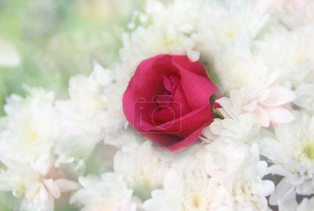 Rose with white chrysanthemum