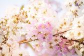 Постер Илангиланг цветы тайский цветок