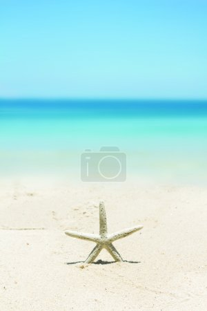 Photo for Starfish standing on the beach - Royalty Free Image