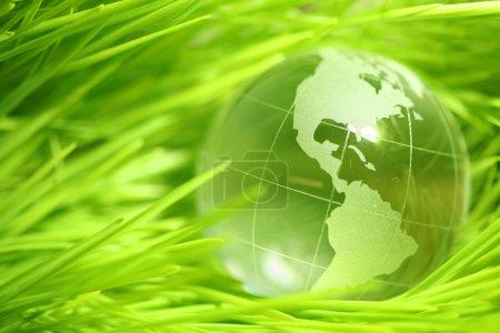 Glass globe in leaves