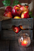 Frische Ernte der Äpfel