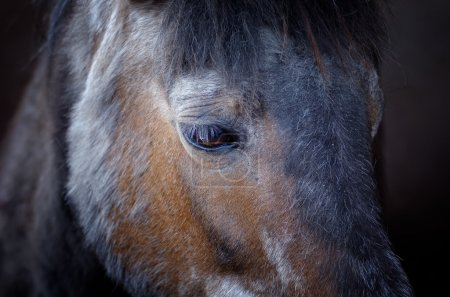 Photo pour Tête de cheval et manteau d'hiver - image libre de droit