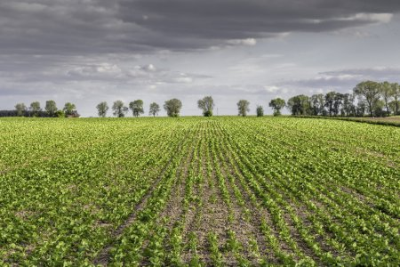Photo for Land with green rows - Royalty Free Image