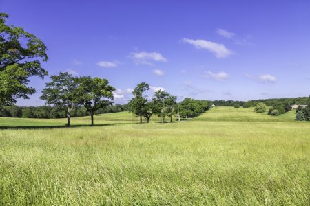 Organic farm land with trees
