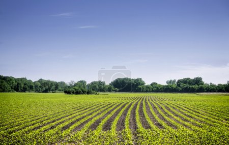 Photo for Organic farm land with green rows - Royalty Free Image