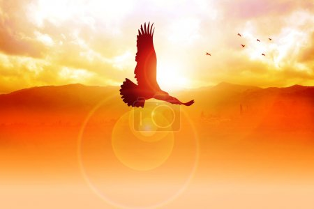 Photo for Silhouette illustration of an eagle flying on sunrise - Royalty Free Image