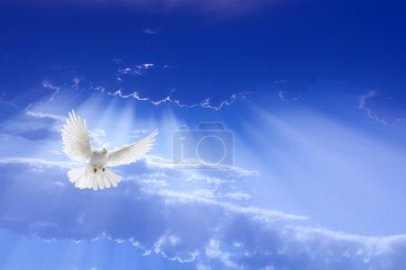 Photo pour Blanche colombe aux ailes déployées, survolant ciel dramatique - image libre de droit