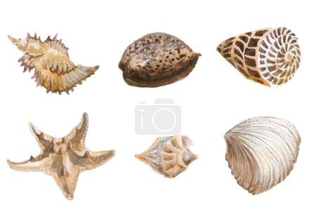 Photo pour Coquilles de mer aquarelle isolé - image libre de droit